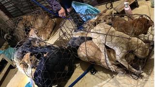 Ba thanh niên Thanh Hóa cầm đầu đường dây trộm hàng trăm tấn chó