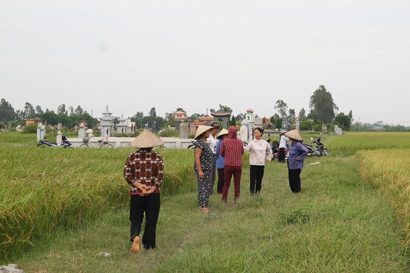 Hà Nam: Người dân kêu trời vì nhiều diện tích lúa lép hạt, năng xuất thấp6