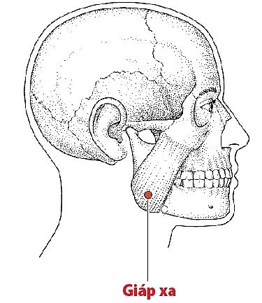 Bấm huyệt chữa tai biến và di chứng tai biến mạch máu não 5