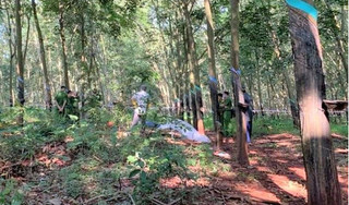 Phát hiện nữ nhân viên quán cà phê 16 tuổi chết trong rừng cao su