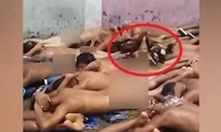 Quản giáo ép 82 tù nhân khỏa thân để cho gà mổ khắp người