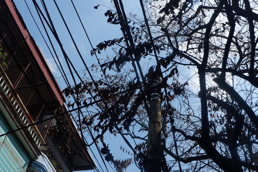 Hàng cây sưa rụng lá bất thường nghi bị kẻ xấu đầu độc giờ ra sao?8