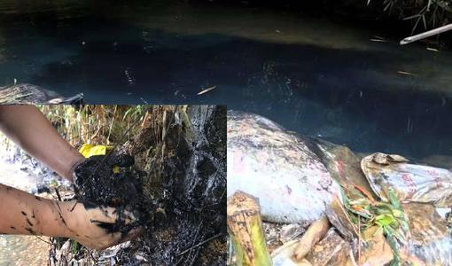 Triệu tập 2 người liên quan vụ đổ dầu gây ô nhiễm nước sông Đà