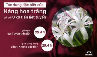 Tác dụng đặc biệt của náng hoa trắng với U xơ tiền liệt tuyến