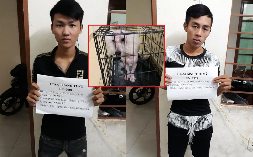 Trộm xong, hai 'cẩu tặc' tuổi teen quay sang tống tiền chủ chó