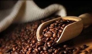 Giá cà phê hôm nay 29/10: Bất ngờ tăng 500 đồng/kg