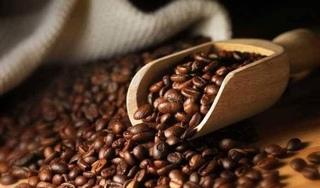 Giá cà phê hôm nay 30/11: Giữ nguyên mức giảm của hôm qua
