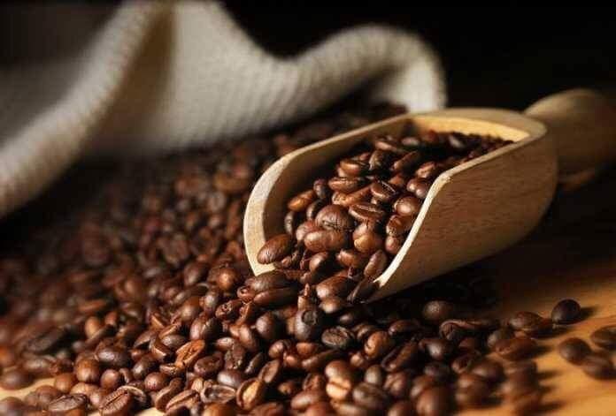 Giá cà phê hôm nay 13/11: Cao nhất ở mức 33.600 đồng/kg