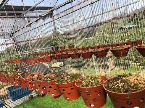 Vườn lan tiền tỷ bị trộm viếng thăm, chủ vườn điêu đứng