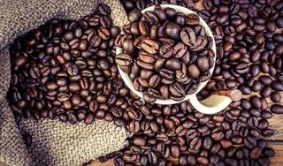 Giá cà phê hôm nay 5/11: Tiếp tục giảm 300 đồng/kg
