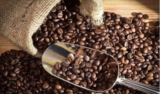 Giá cà phê hôm nay 31/10: Tiếp tục tăng thêm 300 đồng/kg