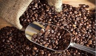 Giá cà phê hôm nay 17/11: Cao nhất ở mức 33.700 đồng/kg