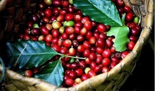 Giá cà phê hôm nay 9/12: Đứng yên phiên đầu tuần