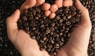 Giá cà phê hôm nay 12/11: Bất ngờ giảm nhẹ 200 đồng/kg