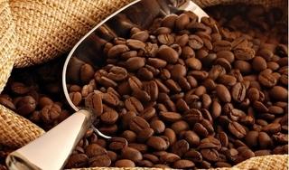 Giá cà phê hôm nay 28/11: Tăng trở lại, phục hồi 300 đồng/kg