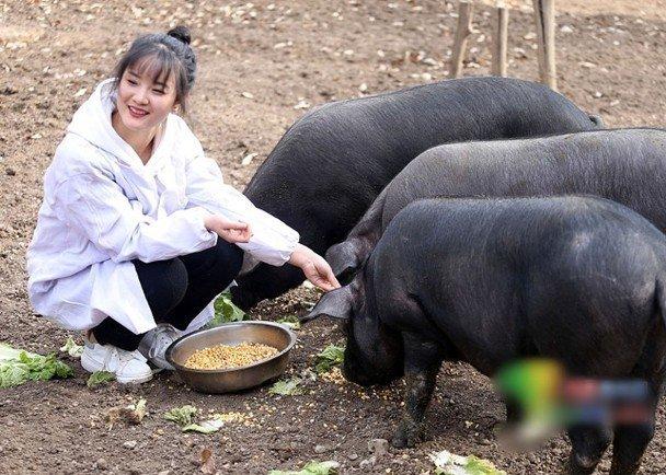 Bố trao thưởng 300 con lợn cho ai chịu lấy con gái