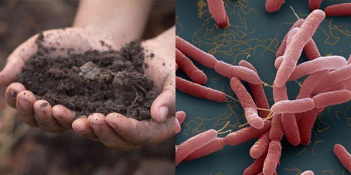 Phát hiện vi khuẩn Whitmore trong mẫu đất vụ 2 anh em ruột tại Hà Nội