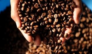 Giá cà phê hôm nay 17/12: Tăng mạnh 600 đồng/kg