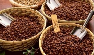 Giá cà phê hôm nay 20/12: Giảm mạnh 700 đồng do giá thế giới lao dốc