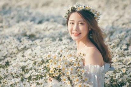 Thiếu nữ xinh đẹp gây 'sốt' bên vườn cúc họa mi tinh khôi ở Hải Phòng