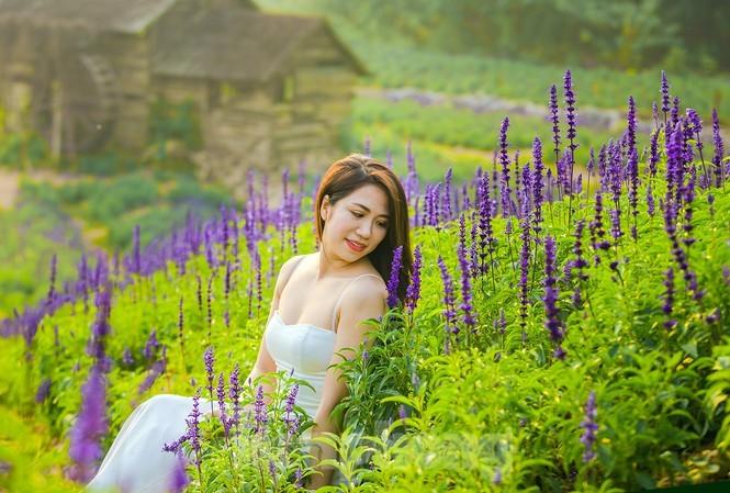 Cánh đồng hoa Nữ hoàng xanh gây sốt giới trẻ Hà Thành