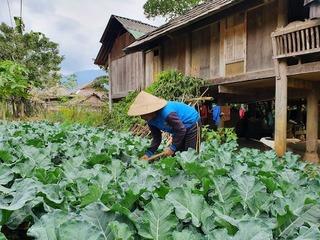 Đem rau 'hiện đại' lên trồng đất núi, rau đã ngon bán lại đắt hàng