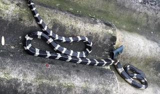 Đang nằm ngủ cạnh mẹ, bé sơ sinh ở Hà Tĩnh bị rắn cắn tử vong