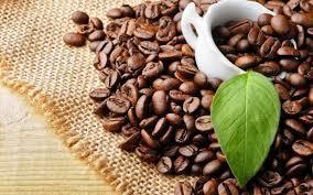 Giá cà phê hôm nay 19/1/2020: Liệu sát tết có tăng trở lại?