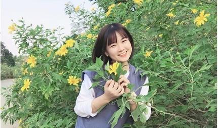 """Du xuân, đừng bỏ lỡ cánh đồng """"hoa mặt trời"""" hàng trăm hec-ta lớn nhất Việt Nam!"""