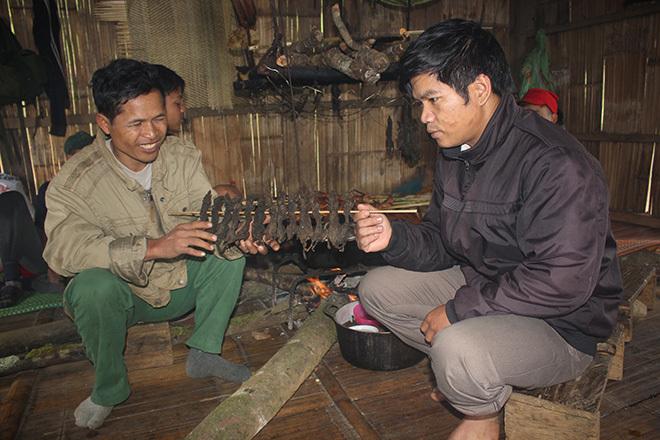 Săn chuột 'quý tộc' ăn sâm trên đỉnh Ngọc Linh