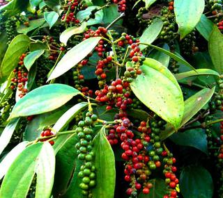 Giá cà phê hôm nay 3/11/2020: Đi ngang tại các vùng trọng điểm