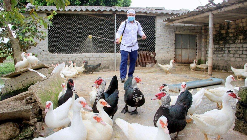 Dịch cúm A/H5N6 xuất hiện ở Hà Nội