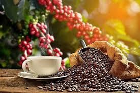Giá cà phê hôm nay 27/2: Đang đà tăng vào cuối tuần
