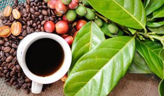 Giá cà phê hôm nay 29/2: Cuối tuần có xu hướng giảm nhẹ