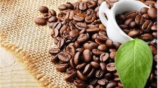 Giá cà phê hôm nay 3/3: Có dấu hiệu cung vượt quá cầu, giá đi xuống