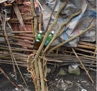 Bắc Kạn: Uống rượu ngâm rễ cây rừng, 2 người tử vong