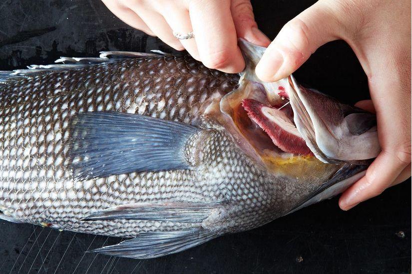 cá tươi ngon được chọn để kho cá thơm ngon chuẩn vị