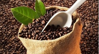 Giá cà phê hôm nay 12/3: Giảm nhẹ sau phiên tăng mạnh hôm qua