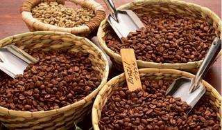 Giá cà phê hôm nay 14/3: Mở phiên giao dịch giảm 200 đồng/kg