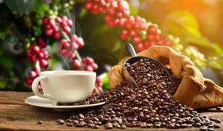Giá cà phê hôm nay ngày 22/3: Giá cà phê trong nước tăng nhẹ