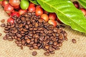 Giá cà phê hôm nay ngày 30/3: Xuống trong khung 29.500 – 29.800 đồng/kg.