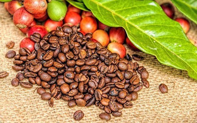 Giá cà phê hôm nay ngày 2/4, tiếp tục giảm sâu