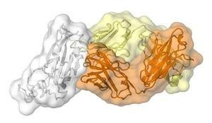 Các nhà nghiên cứu tìm ra điểm yếu của virus SARS-CoV-2