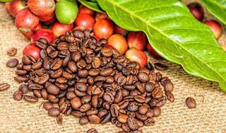 Giá cà phê hôm nay ngày 15/4: Trong nước bình ổn, thế giới giảm sâu