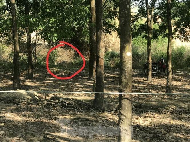 Bí ẩn thi thể nam giới chết quỳ trong rừng cao su