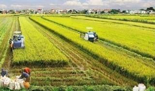 Tin tức trong ngày 20/4: Quyết định miễn thuế sử dụng đất nông nghiệp đến năm 2025