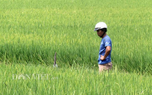 Các tỉnh, DN đồng loạt kiến nghị cho xuất khẩu gạo không hạn ngạch