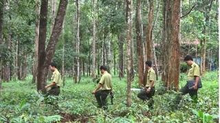 Nguyên Giám đốc Sở NN-PTNT Lâm Đồng bị khởi tố vì vi phạm quy định về quản lý rừng