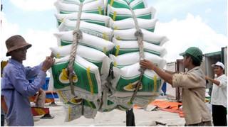 Tạm đình chỉ công tác 7 cục trưởng liên quan đến dự trữ gạo quốc gia