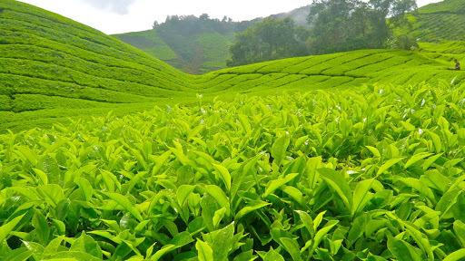 Khám phá những địa điểm đẹp không kém phần thơ mộng ở Lai Châu5